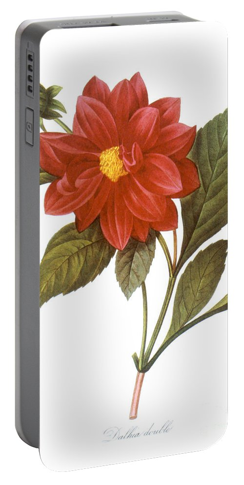 1833 Portable Battery Charger featuring the photograph Dahlia (dahlia Pinnata) by Granger