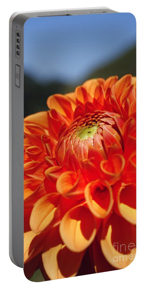Flower Portable Battery Charger featuring the photograph Dahlia by Gaspar Avila