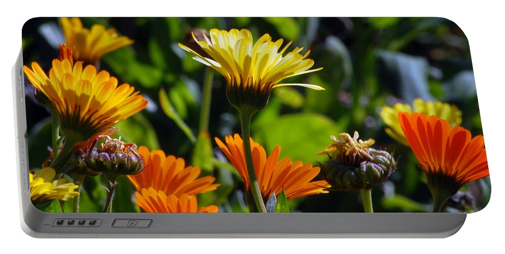 Dasy Portable Battery Charger featuring the photograph Daisies by Amy Fose
