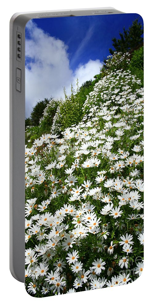Countryside Portable Battery Charger featuring the photograph Daisies by Gaspar Avila