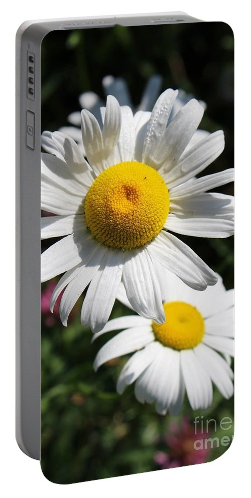 Daisies Portable Battery Charger featuring the photograph Daisies In The Sunshine by Colleen Snow