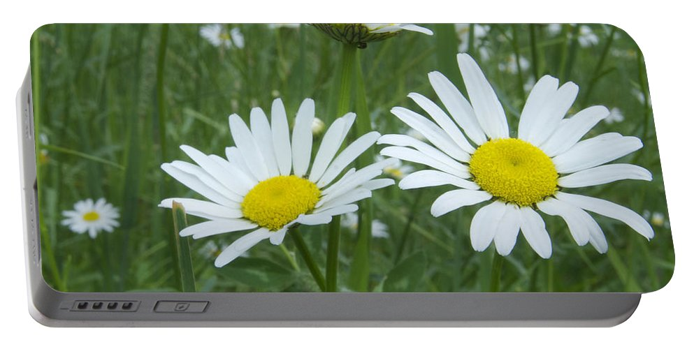 Flower Portable Battery Charger featuring the photograph Daisies by Michael Peychich