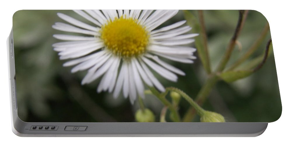 Macro Portable Battery Charger featuring the photograph Daisy In White by Alexis Ketner