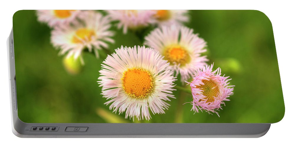 Basstown Portable Battery Charger featuring the photograph Daisy Weeds by FineArtRoyal Joshua Mimbs
