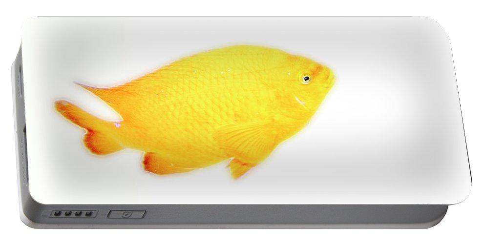Damselfish Portable Battery Charger featuring the digital art Damselfish by A Gurmankin