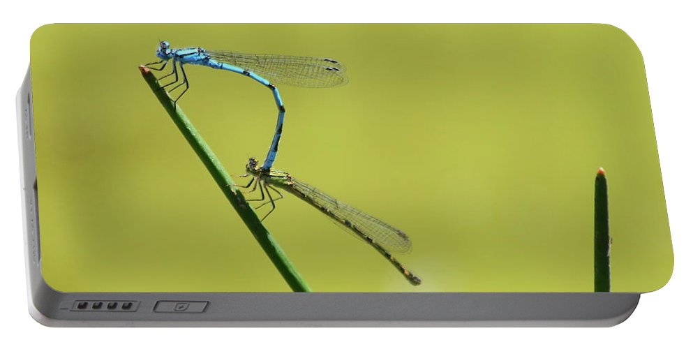 Damselflies Male Female Blue Green Insects Wings Reeds Nature Wildlife Odonata Flying Insect Portable Battery Charger featuring the photograph Damselflies by Jeff Townsend