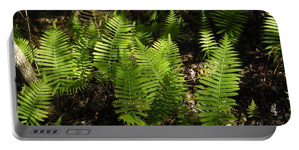 Ferns Portable Battery Charger featuring the photograph Dancing Ferns by David Lee Thompson