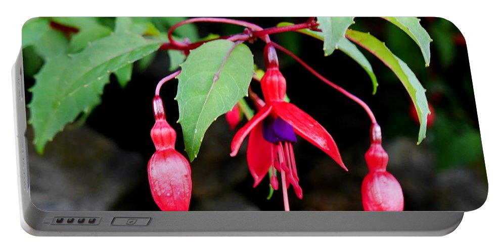 Portable Battery Charger featuring the photograph Dancing Fuchsia by Lexa Harpell