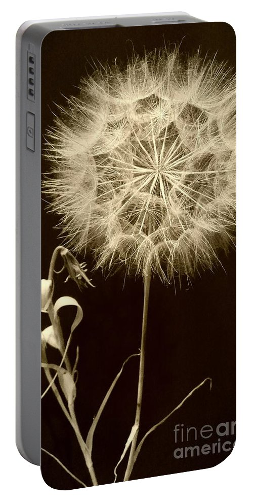 Dandelion Portable Battery Charger featuring the photograph Dandelion Twenty Eight by LKB Art and Photography