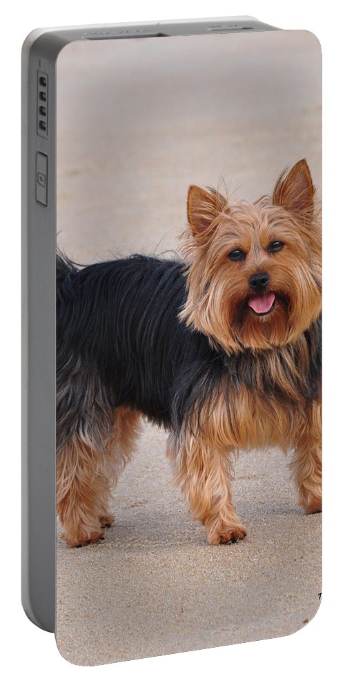 Yorkie Portable Battery Charger featuring the photograph Dapper Dog by Trish Tritz