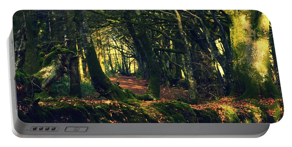 Trees Portable Battery Charger featuring the photograph Dark Woods by Andy Thompson