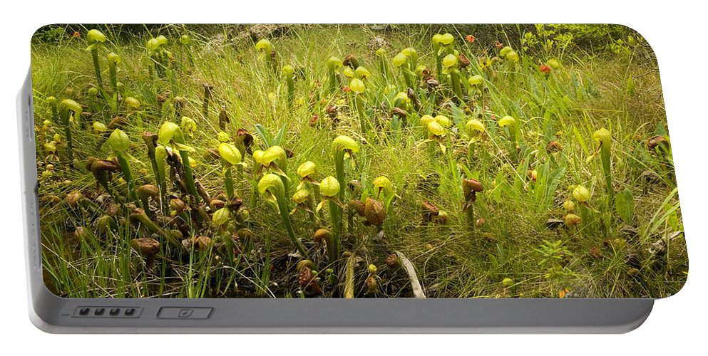 Darlingtonia Portable Battery Charger featuring the photograph Darlingtonia Plants Grow Beside by Inga Spence