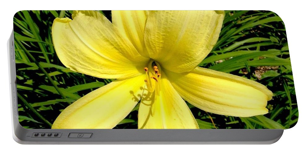 Flower Portable Battery Charger featuring the photograph Day Daisy by Francois Cusson