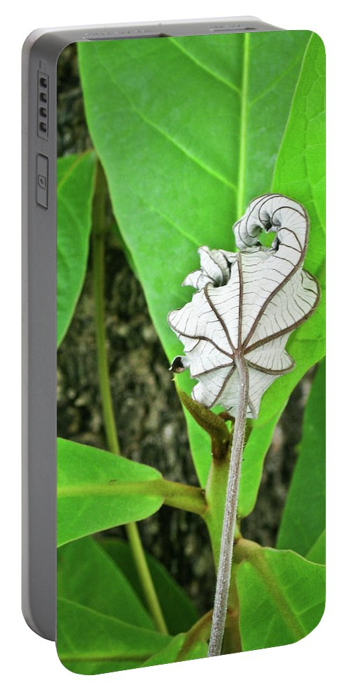 Resurrection Portable Battery Charger featuring the photograph Dead Leaf Live Leaf by Douglas Barnett
