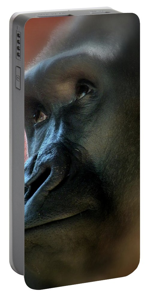 Gorilla Portable Battery Charger featuring the photograph Dear God by Trish Tritz