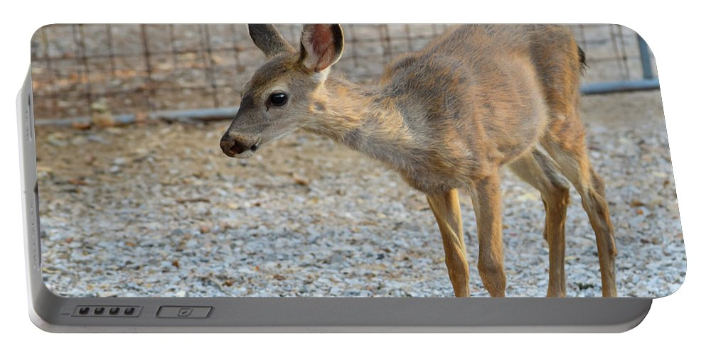 Deer Portable Battery Charger featuring the photograph Deer Fawn - 2 by Alan C Wade