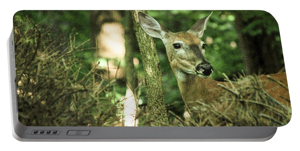 Deer Portable Battery Charger featuring the photograph Deer In The Woods by Larry Pegram