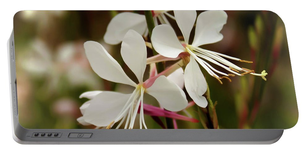 Nature Portable Battery Charger featuring the photograph Delicate Gaura Flowers by Joann Copeland-Paul