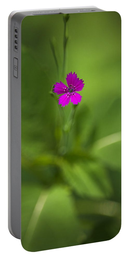 Deptford Pink Portable Battery Charger featuring the photograph Deptford Pink Dianthus Flower by Christina Rollo