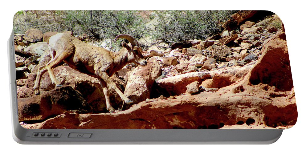 Bighorn Sheep Portable Battery Charger featuring the photograph Desert Bighorn Ram Walking The Ledge by Dale E Jackson