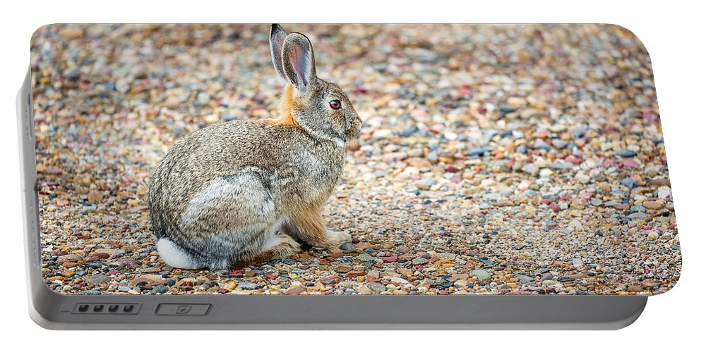 Rabbit Portable Battery Charger featuring the photograph Desert Cottontail by Todd Klassy