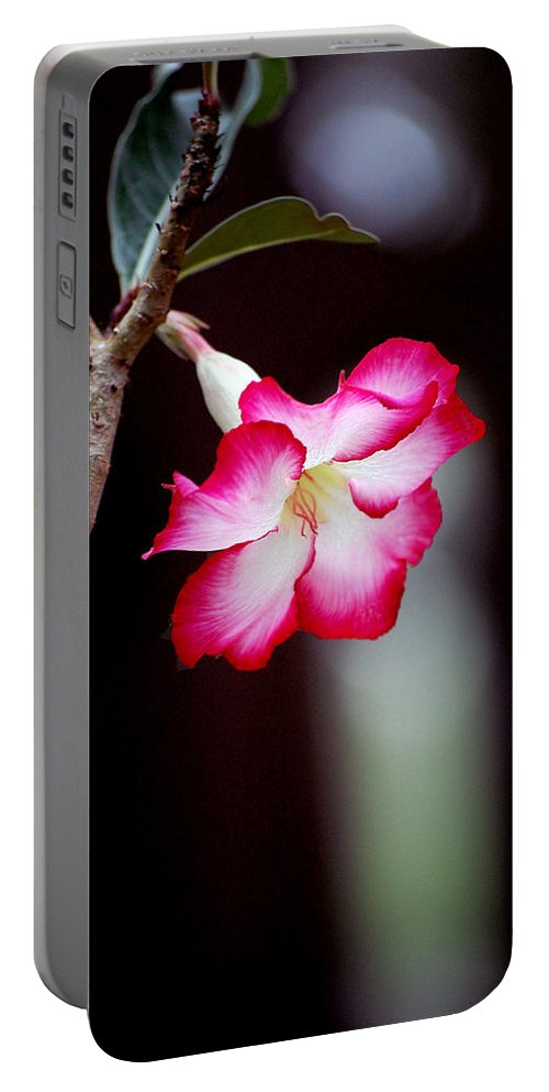 Flower Portable Battery Charger featuring the photograph Desert Flower by Robert Meanor