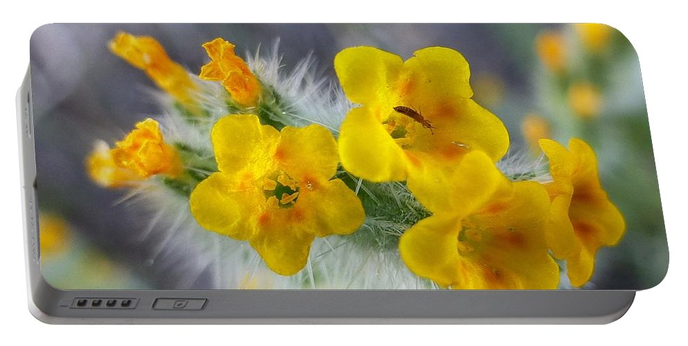 Desert Portable Battery Charger featuring the photograph Desert In Bloom by Melinda Marsh