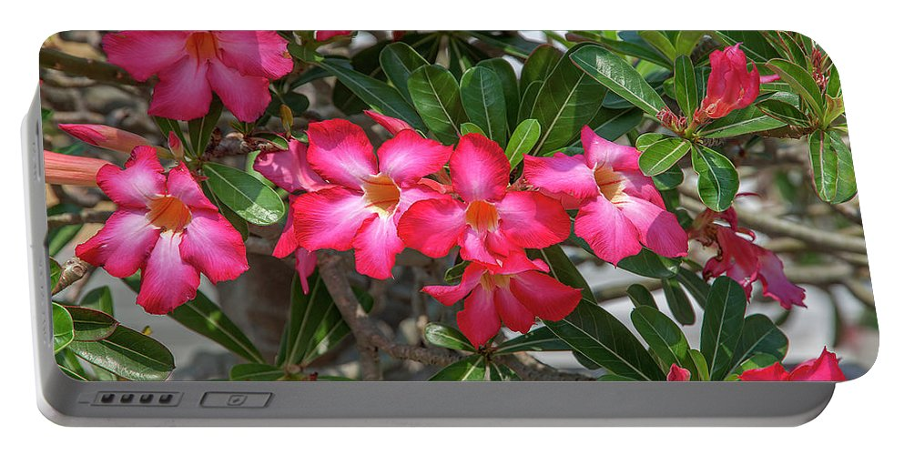 Scenic Portable Battery Charger featuring the photograph Desert Rose Or Chuanchom Dthb2107 by Gerry Gantt
