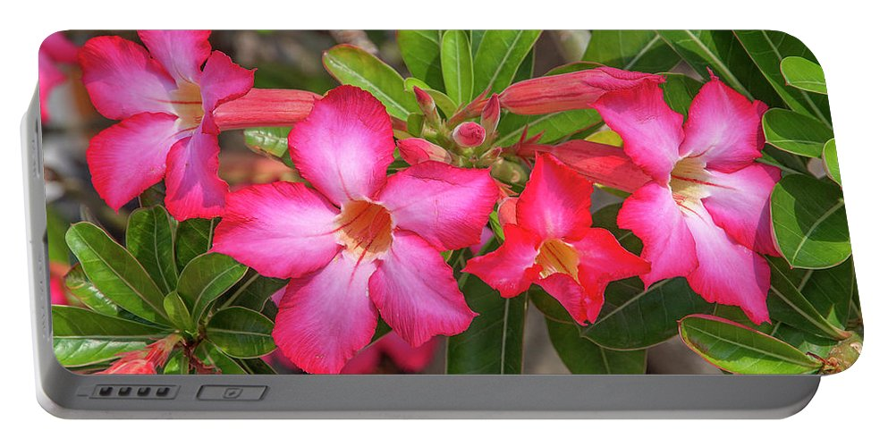 Scenic Portable Battery Charger featuring the photograph Desert Rose Or Chuanchom Dthb2108 by Gerry Gantt