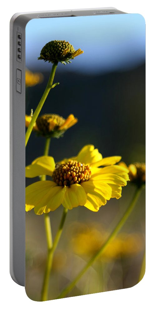 Desert Sunflower Portable Battery Charger featuring the photograph Desert Sunflower by Chris Brannen