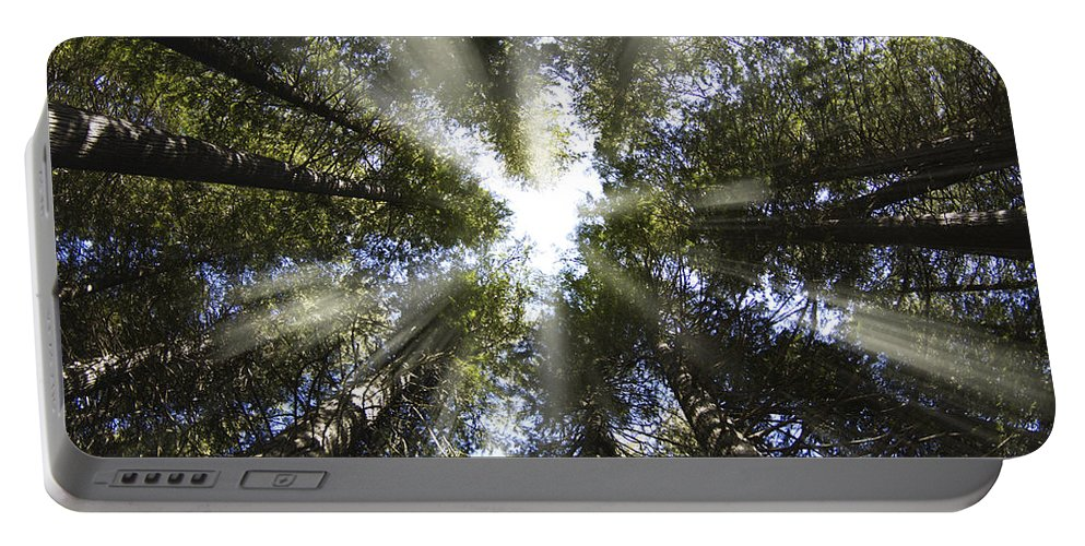 Devoto Grove Portable Battery Charger featuring the photograph Devoto Grove by Leland D Howard