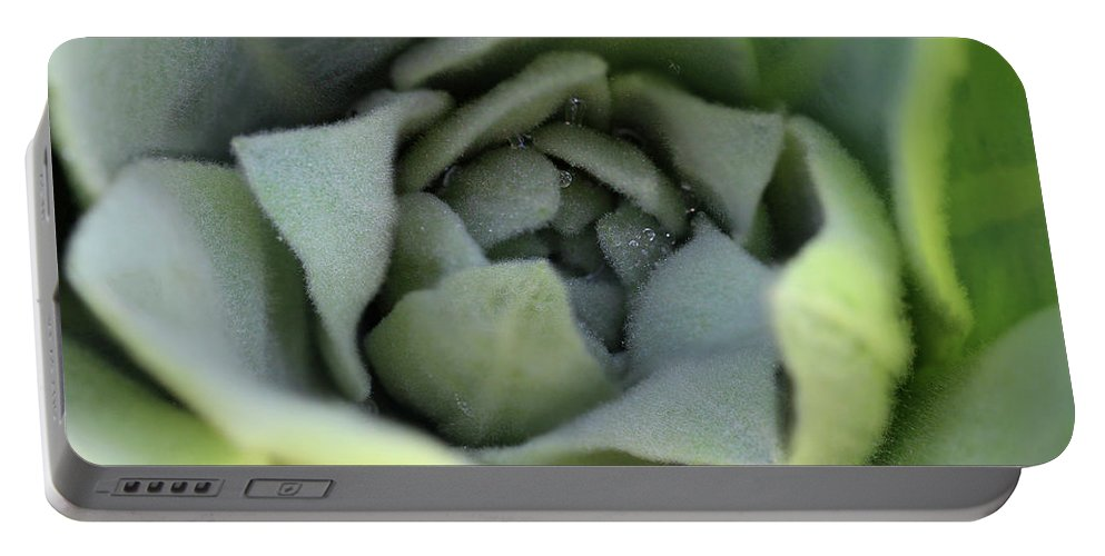 Mullein Portable Battery Charger featuring the photograph Dew On Common Mullein by Karen Adams