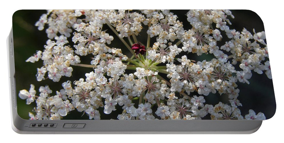 Wildflowers Portable Battery Charger featuring the photograph Dew On Queen Annes Lace by Lynn Quinn