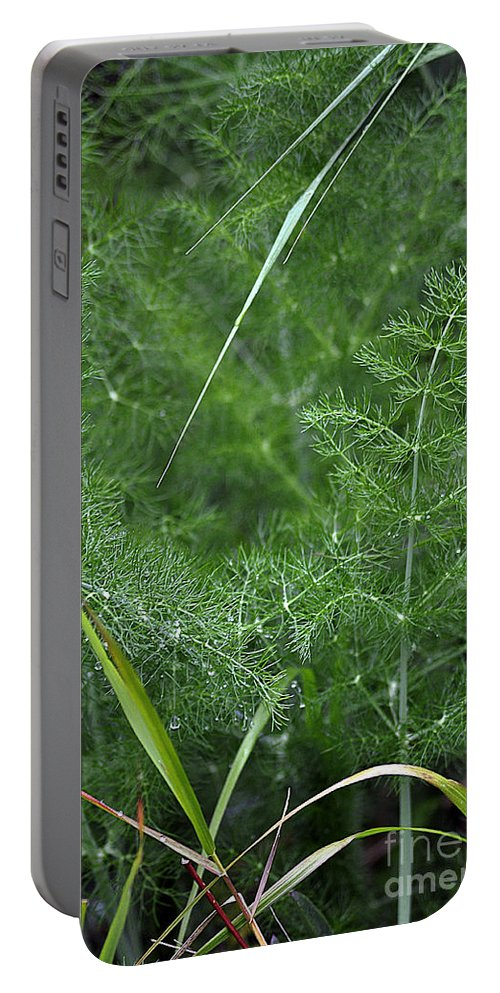 Clay Portable Battery Charger featuring the photograph Dew On The Ferns by Clayton Bruster