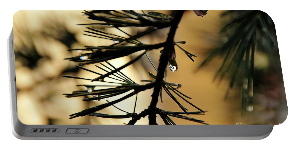 Tree Portable Battery Charger featuring the photograph Dewdrop by Ilaria Andreucci