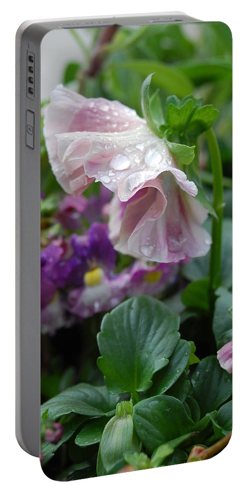 Pansy Portable Battery Charger featuring the photograph Dewy Pansy 4 by Amy Fose