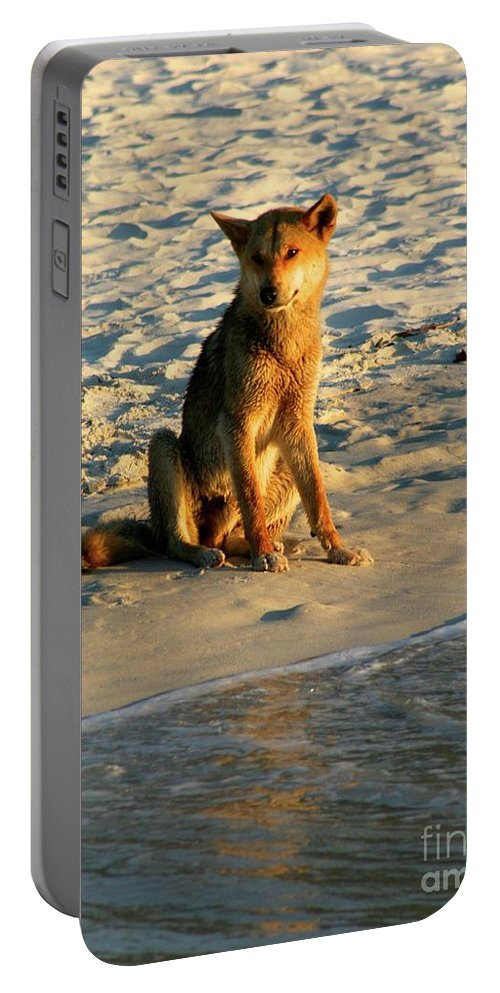 Dingo / Australia / Fraser Island Portable Battery Charger featuring the photograph Dingo On The Beach by Gregory E Dean