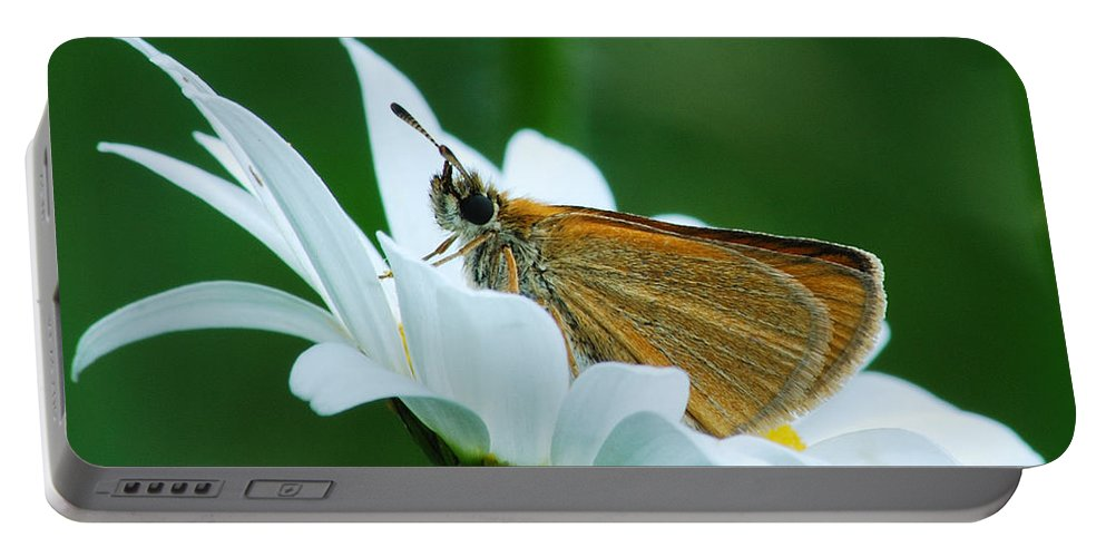 Daisy Portable Battery Charger featuring the photograph Dion Skipper In Square by Michael Peychich