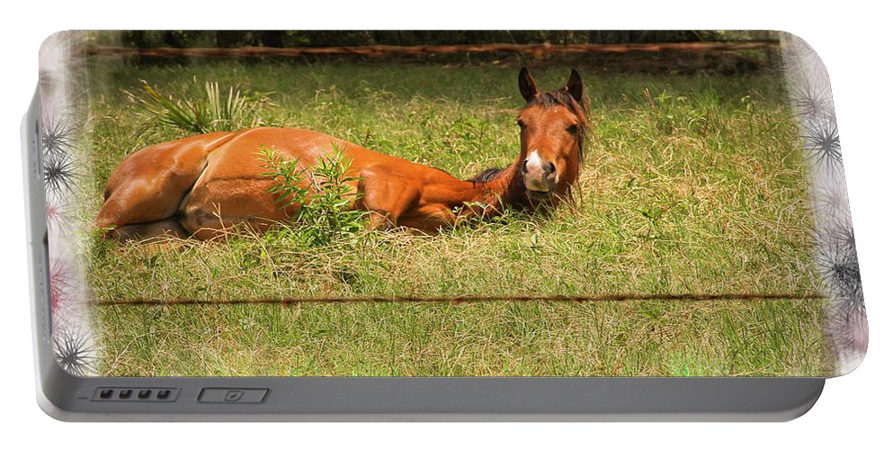 Horses Portable Battery Charger featuring the photograph Disturbed Napping by Kim Henderson