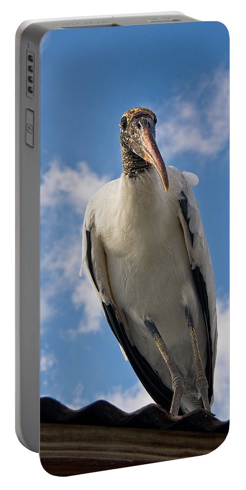 Stork Portable Battery Charger featuring the photograph Do I Know You by Christopher Holmes