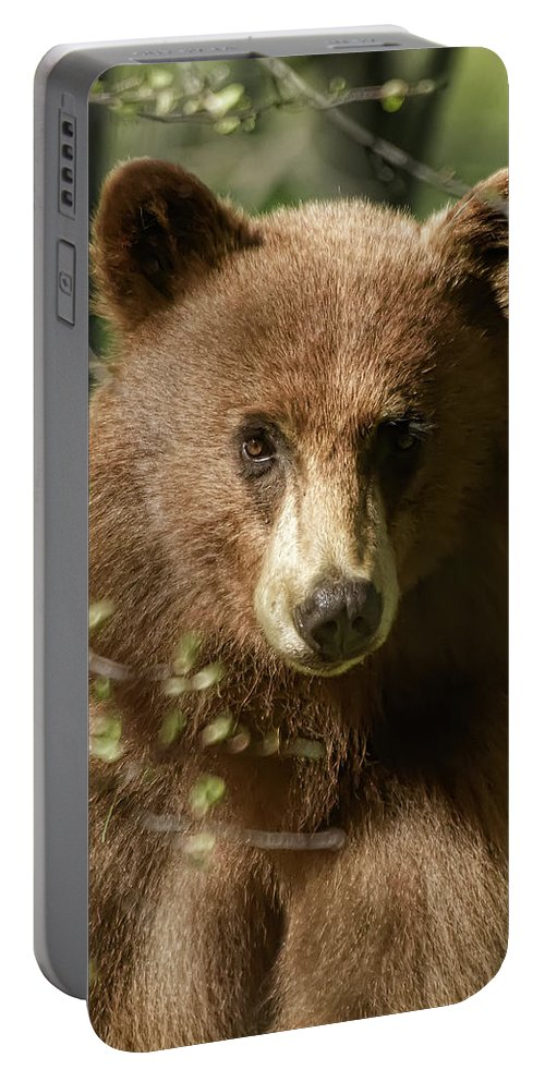 Black Bear Portable Battery Charger featuring the photograph Do Ya Think I'm Sexy by Dennis Bolton
