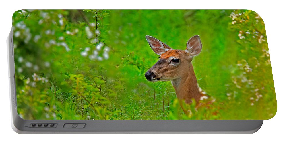 Deer Portable Battery Charger featuring the photograph Doe In Springtime by William Jobes