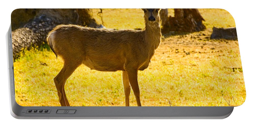 Doe Portable Battery Charger featuring the photograph Doe by Mick Burkey