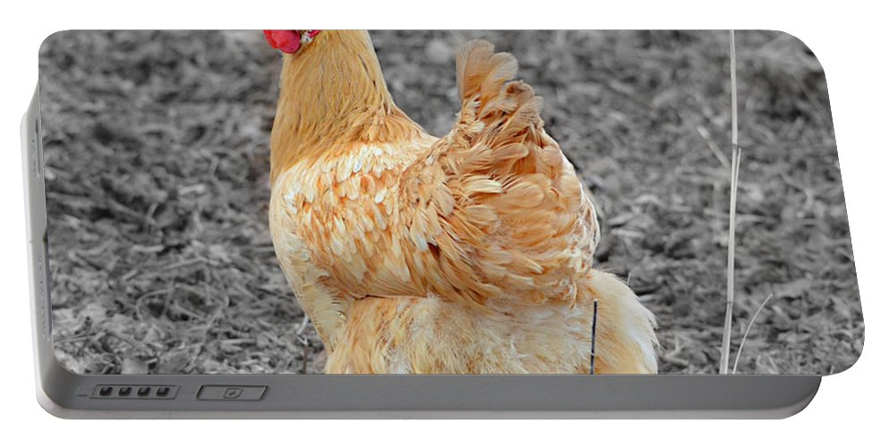 Chicken Portable Battery Charger featuring the photograph Domestic Feathered Beauty by Ally White
