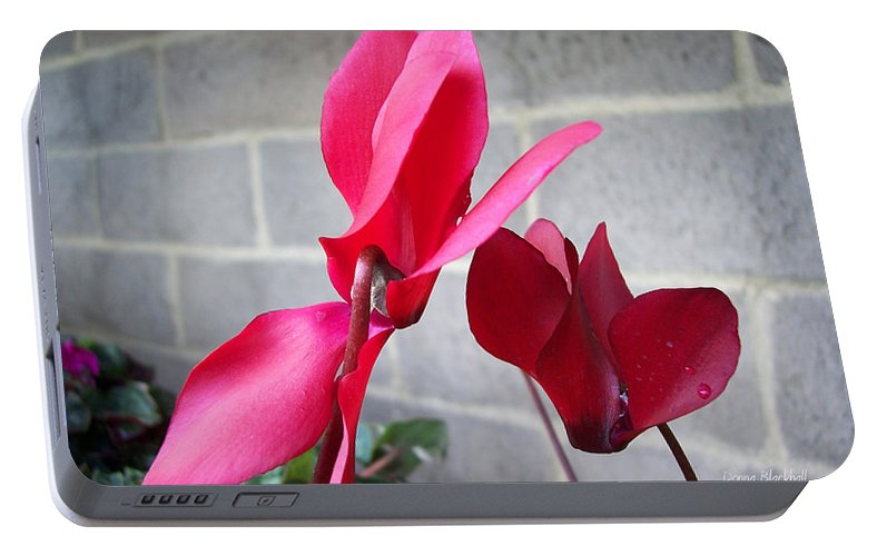 Flower Portable Battery Charger featuring the photograph Dominance by Donna Blackhall