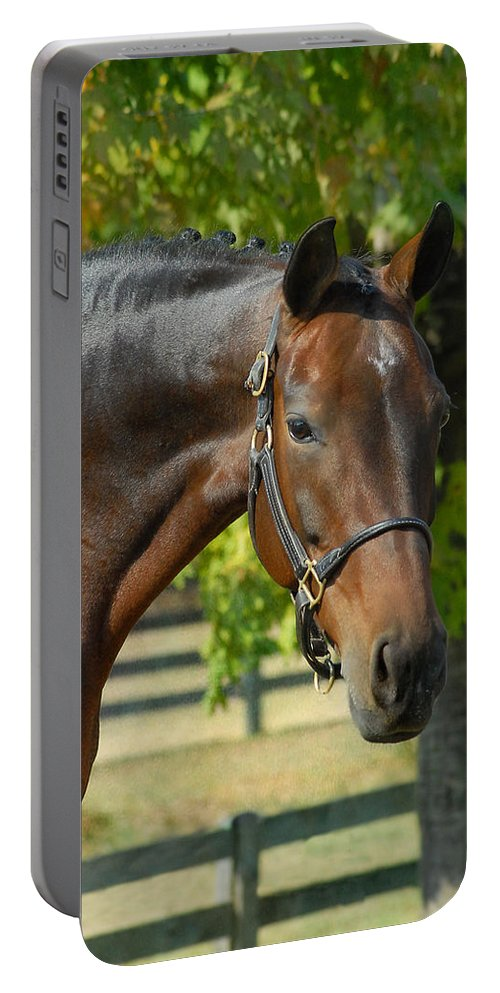 Warmblood Horses Portable Battery Charger featuring the photograph Donna Gina by Fran J Scott