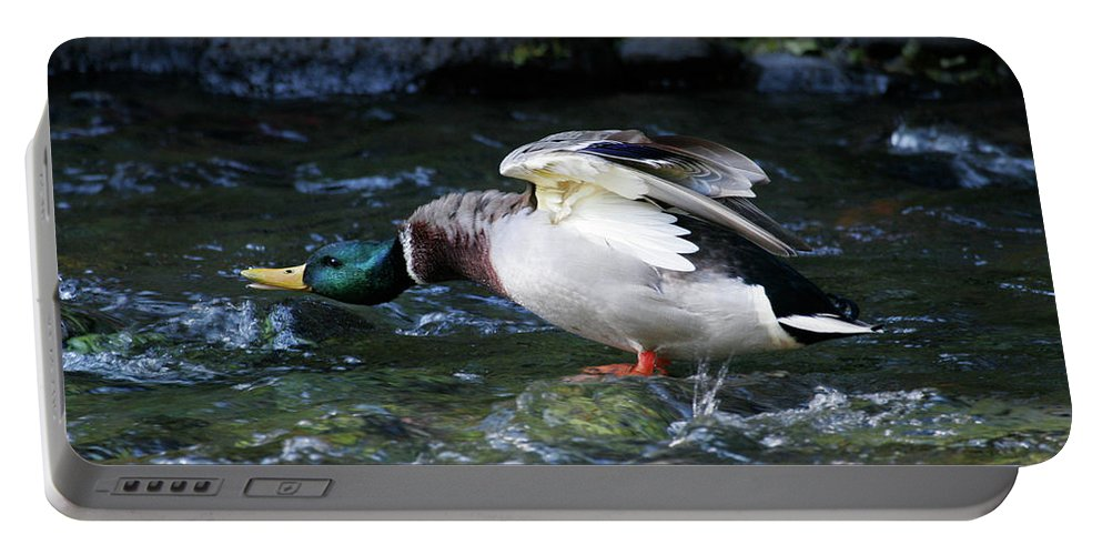 Mallard Drake Portable Battery Charger featuring the photograph Don't Mess With Me by Randall Ingalls