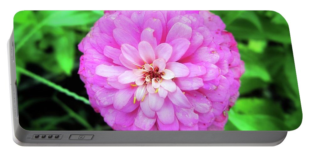 Flower Portable Battery Charger featuring the photograph Double Pink Zinnia by John Myers