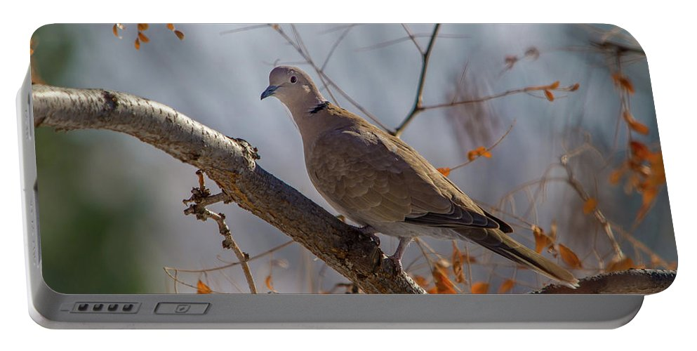 Dove Portable Battery Charger featuring the photograph Dove On A Branch by David F Hunter