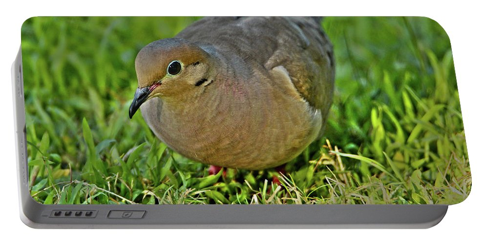 Dove Portable Battery Charger featuring the photograph Dove With Hdr by David Stasiak